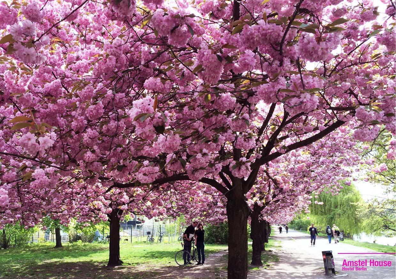 Best Outdoor Berlin Spring Activities